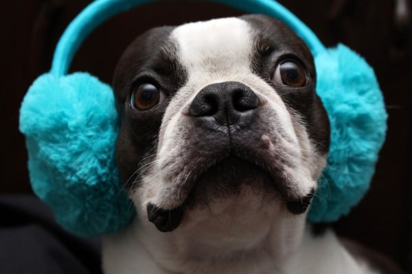 Earmuffs for dogs