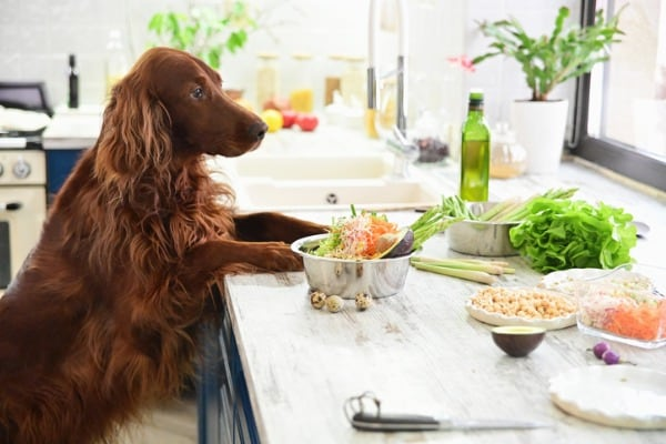cooking-vegetarian-food-for-pets-
