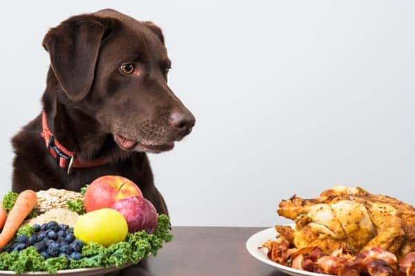 Diet for Dog