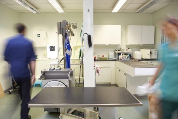 veterinary-clinic-example