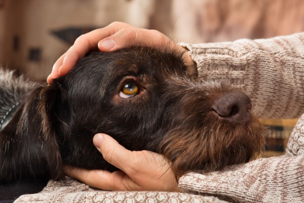 Cuddling smelly dog