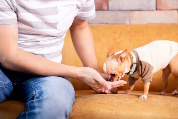feeding-homemade-dog-treat