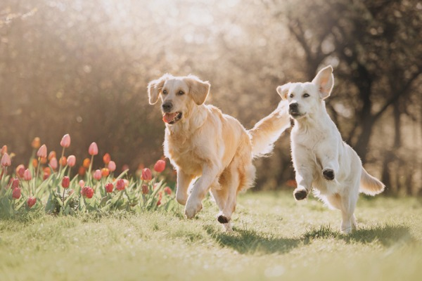 Dogs getting air on body outdoors