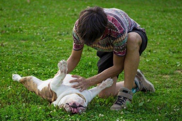 checking-hard-dog stomach