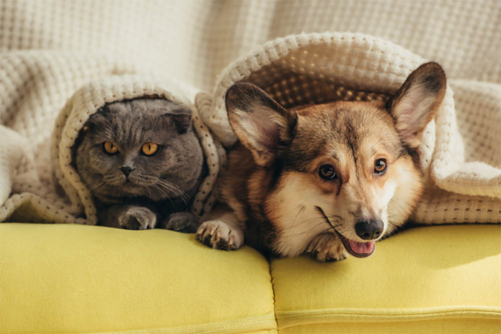 Can Dogs Mate With Cat