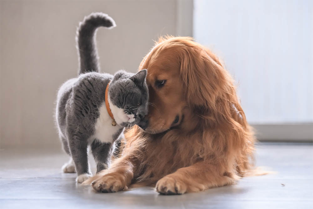 Can dogs mate with cats
