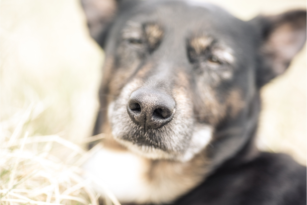 Can dogs sense death
