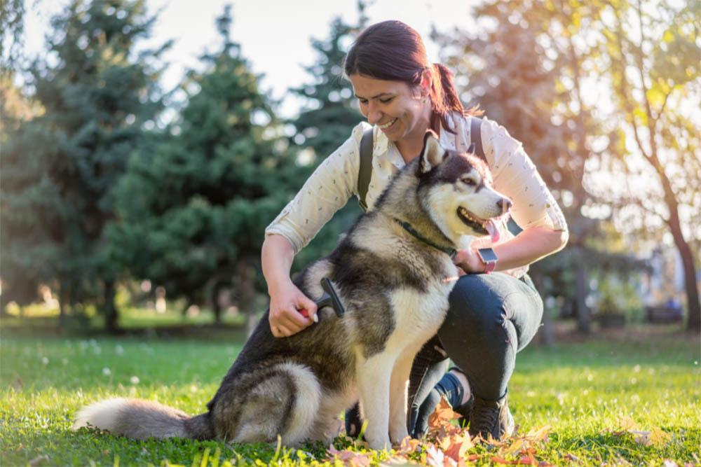 Do Huskies Love Their Owners