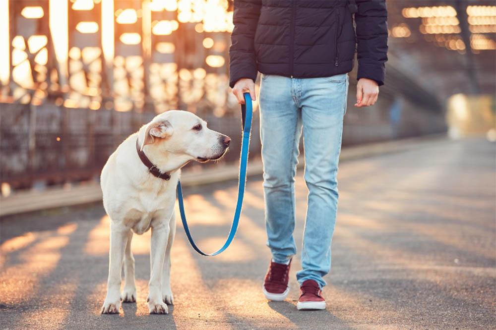 Do I need to walk my dog every day