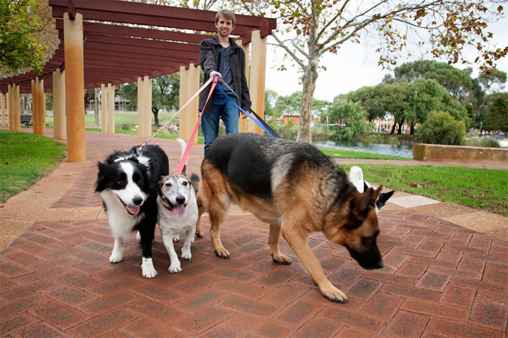 Do I need to walk my dog everyday