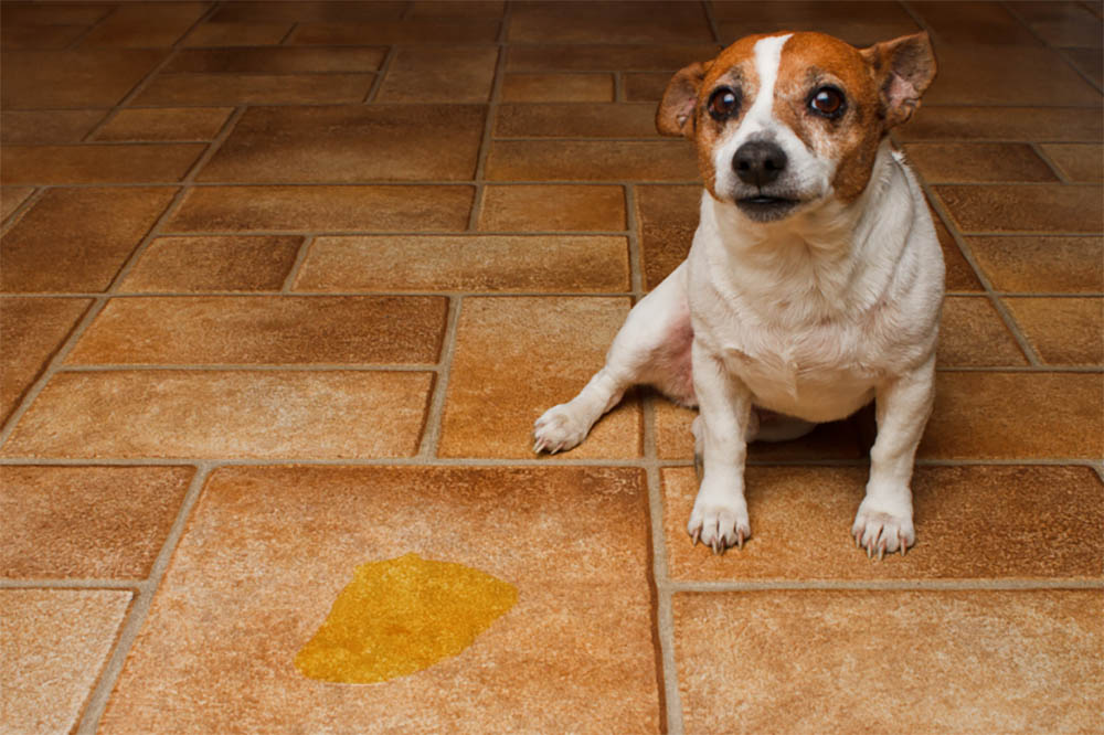 Does vinegar stop dogs from peeing in the house