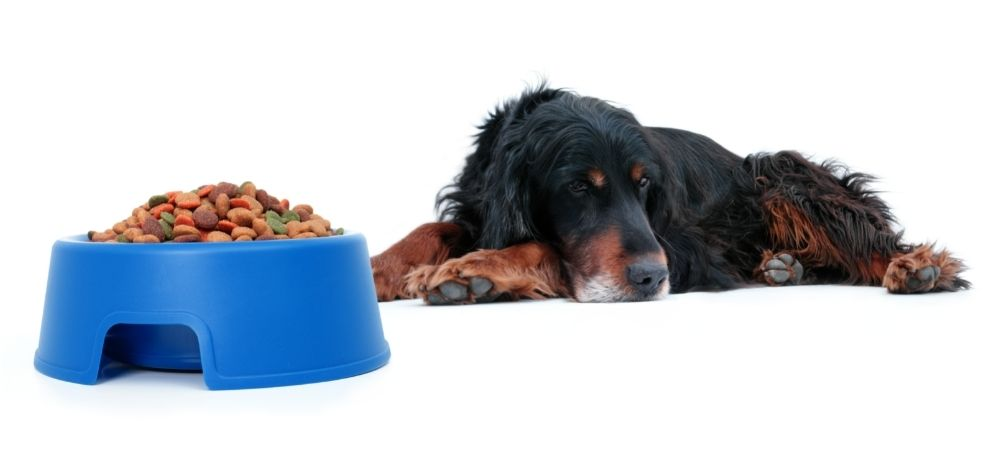 Stop acid reflux dogs