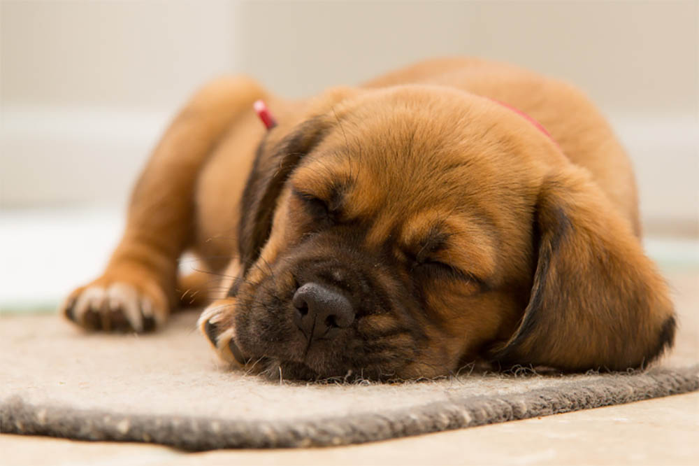 How often should dogs fart