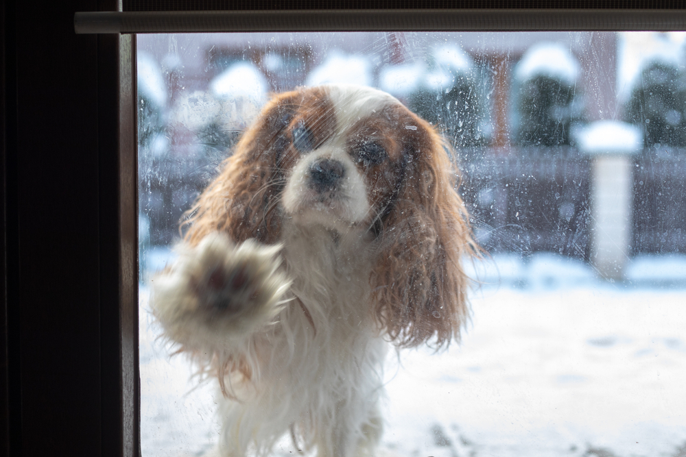 How to Protect a Glass Door from Dog Scratches