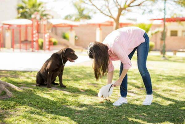 Human Hair In Dog Poop