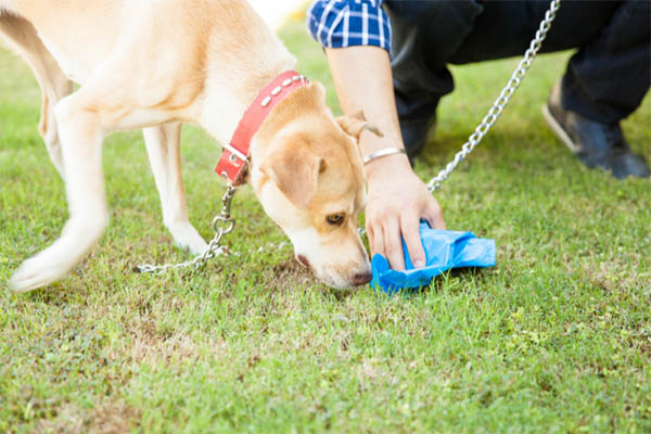 Human Hair in Dog Poop Why It's There and how You Stop It