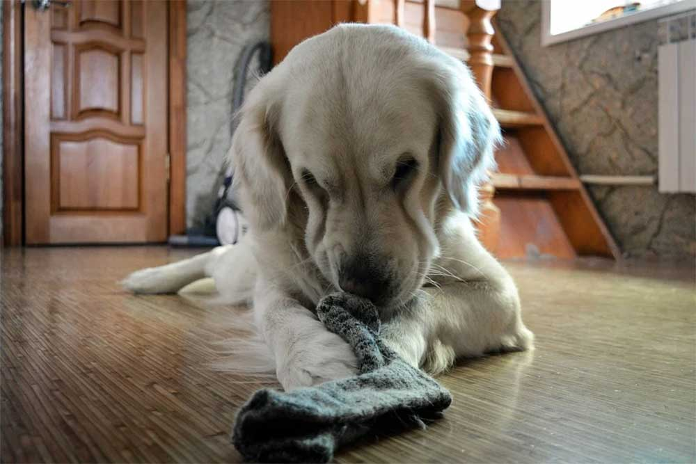 Dog eating human hair