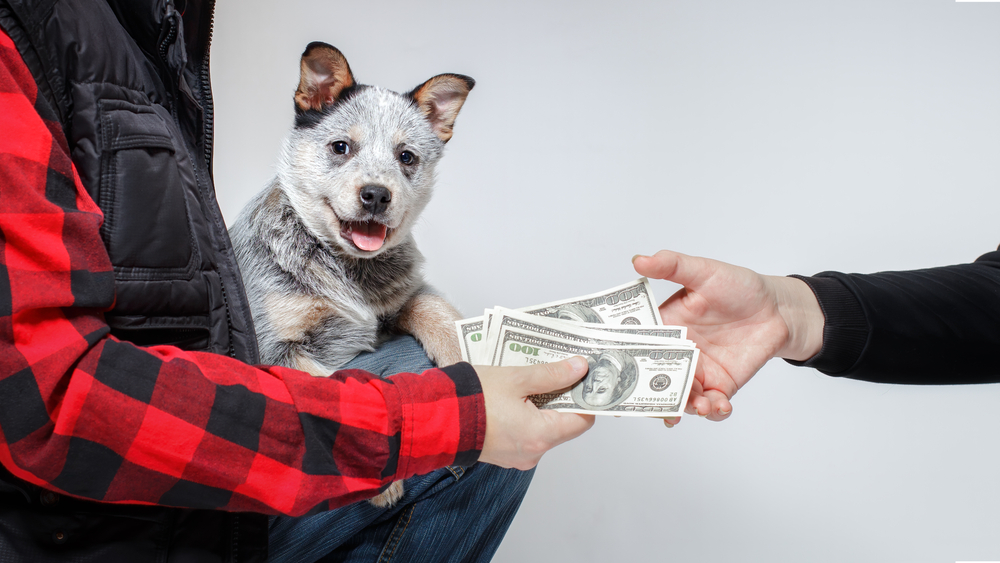 Is It Okay to Buy a Puppy Without Papers