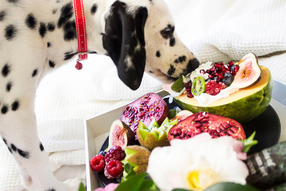What Food Is Best For Dogs With Gas
