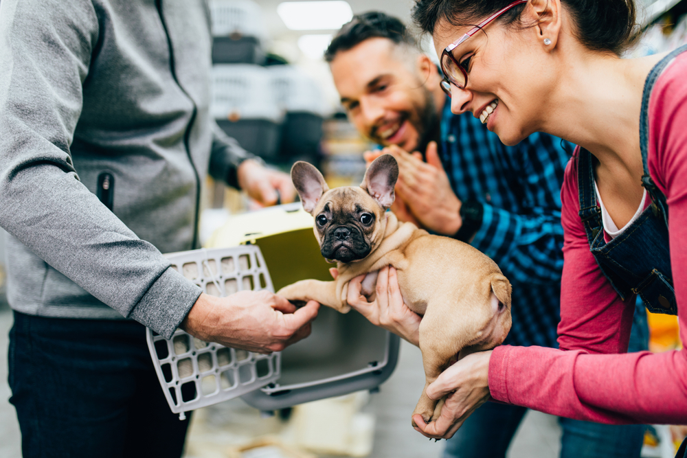 What to Do When Buying a Puppy