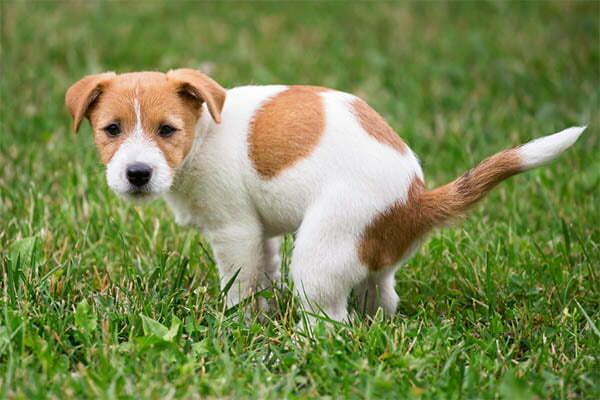 White specks in dog poop
