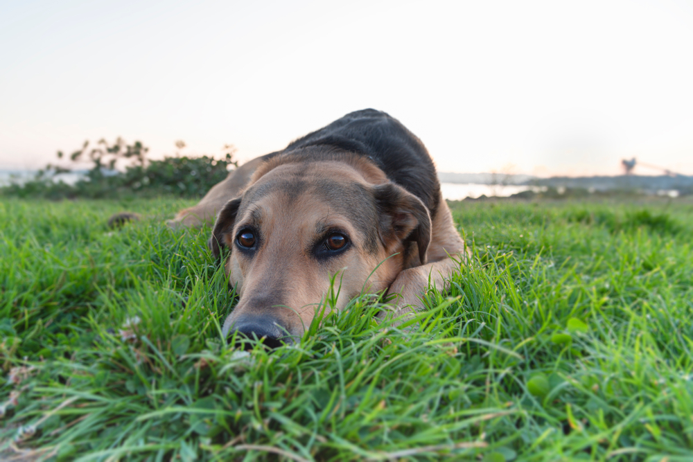 Why Does My Dog Eat Deer Poop And How To Stop Him Getting Sick