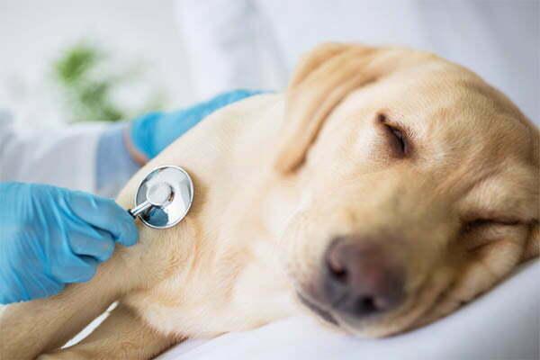 a Dog With Lymphoma