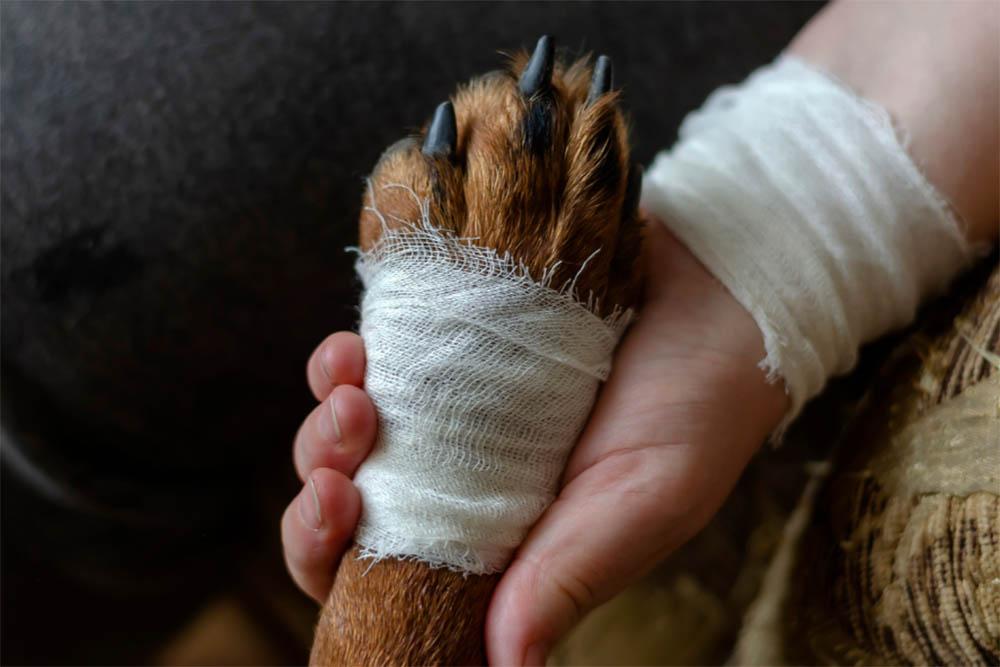 Is My Dog's Toe Broken Signs