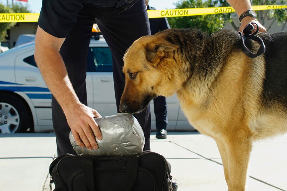 Police use sniffer dogs